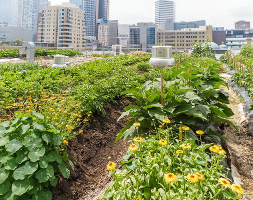 Insurance and coverage for urban agriculture